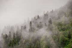 Misty Evening Fotografie Stock Libere da Diritti