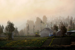 Misty Evening. A foggy evening over a rural plantation in Mount Bromo, Java, Indonesia Stock Photography