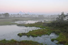 Misty evening in Kakerdaja Bog Stock Images