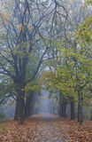 Misty evening in old park Royalty Free Stock Photo