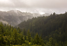 Misty Evergreen Forest dopo la tempesta fotografie stock