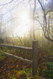 Misty fall forest at the morning Stock Image
