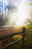 Misty fall forest at the morning Stock Images