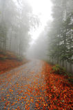 Misty fall path Royalty Free Stock Images