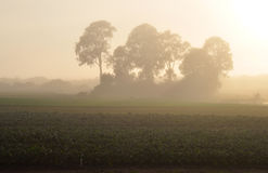 Misty farm sunrise. Sunrise through mist on a farm on Southern Moreton Bay just south of Brisbane Royalty Free Stock Image