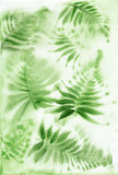 Misty Fern background. Watercolor original painting of misty fern. Wet method Stock Photos