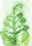 Misty Fern background. Watercolor original painting of misty fern. Wet method Stock Photo