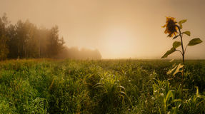 Misty field Stock Photos