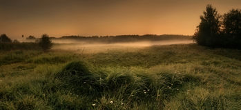 Misty field royalty free stock photo