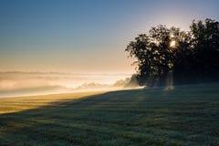 Misty Field in Dawn Royalty-vrije Stock Afbeeldingen