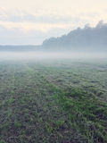 Misty field with freshly mown grass Stock Photography