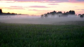 Misty field at sunset stock video footage