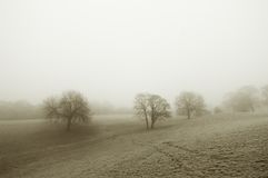 Misty field in winter Royalty Free Stock Image