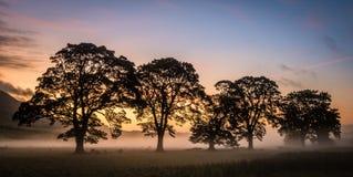 Misty Fields Stock Photos