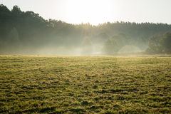 Misty fields and meadows after the rain in summer Stock Photo
