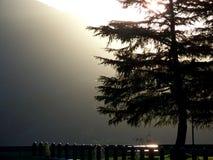Misty Fir Tree Stock Photo