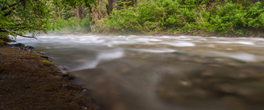 Misty Flowing Creek Royalty Free Stock Photography