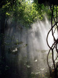 Misty fog. On a hot summer morning Royalty Free Stock Photography