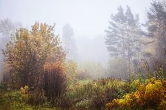 Misty fog forest in Belarus, golden autumn folliage. Misty fog forest on the sunrise morning in the autumn folliage royalty free stock image