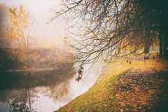 Misty fog forest in Belarus park by the river, golden autumn folliage. Misty fog forest on the sunrise morning in the autumn folliage in park by the river stock photos