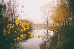 Misty fog forest in Belarus park by the river, golden autumn folliage. Misty fog forest on the sunrise morning in the autumn folliage in park by the river stock photography