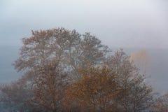 Morning fog in forest. Misty fog in the morning forest landscape stock image