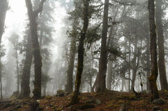 Misty foggy forest. Damp foggy forest and trees covered with epiphytes. Uttarakhand Himalayas Royalty Free Stock Images