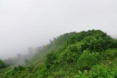Misty Foggy Landscape On Bad-de Dag van de Weerzomer royalty-vrije stock afbeelding