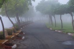 Foggy path through the trees in the UAE stock photography
