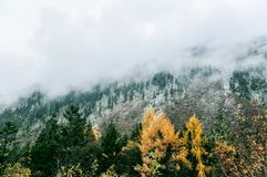 Free Misty Foggy Mountain Landscape With Fir Forest Royalty Free Stock Photo - 140546075