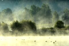 Free Misty Foggy Sunrise In Summer Near Forest Stock Photos - 194639313