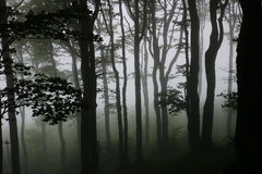 Misty forest. Misty mysterious green forest : black trees silhouettes Royalty Free Stock Image