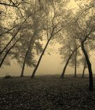Misty forest. View of misty forest in fall season Royalty Free Stock Photos