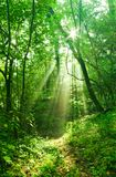 Misty forest Stock Photography