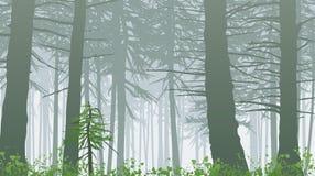 Misty forest vector illustration