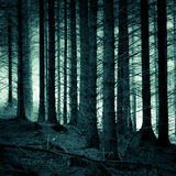 Misty forest. Photo of trees. Dark, misty atmosphere Royalty Free Stock Image