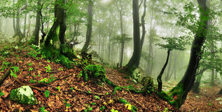 Misty forest Stock Photos