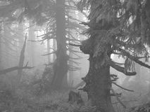Free Misty Forest Stock Photo - 26925420