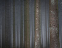 Misty forest. Misty scenery in a pine-tree forest stock images