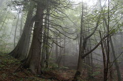 Misty forest Stock Photo