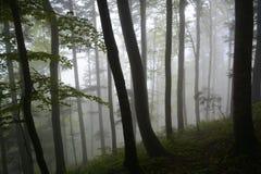 Misty Forest Fotos de Stock Royalty Free