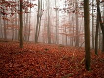 Misty Forest. A view of a misty forest during the fall in Germany stock image