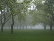 Misty Forest. A misty forest setting with green grass and trees royalty free stock image