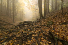 Misty forest Royalty Free Stock Image