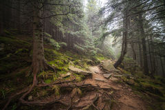 Misty Forest After Rain Royalty Free Stock Image