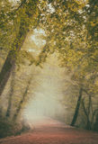 Misty forest along the pathway Royalty Free Stock Photo
