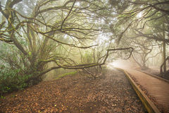 Misty forest in Anaga mountains, Tenerife, Canary island, Spain. Royalty Free Stock Photos