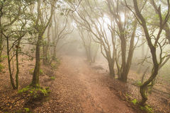 Misty forest in Anaga mountains, Tenerife, Canary island, Spain. Royalty Free Stock Images