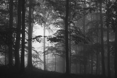 Misty forest. Atmospherical photo of forest in mist Stock Photos