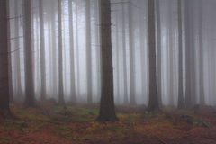 Misty forest - autumn background Stock Image